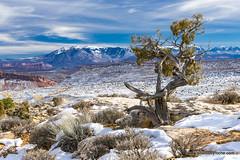 Arches landscape in snow (doveoggi) Tags: 0546 utah nationalpark archesnationalpark moab tree landscape snow destination mountains