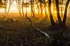a fairytale morning (Marc.van.Veen) Tags: birch cobweb