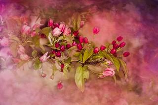 Sweet Dreams Of Spring