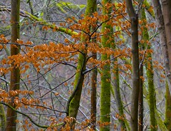 Rustic Colours of Nature (Edinburgh Photography) Tags: nature outdoors landscape forest trees leaves cramond nikon d7000