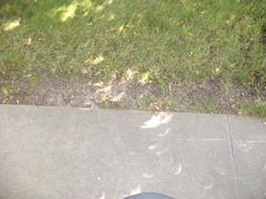 Partial Solar Eclipse Shadow (Brandon Blahnik) Tags: walkway partial solar eclipse crescent shaped shadow