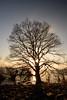 琵琶湖・湖北25・Lake Biwa (anglo10) Tags: 長浜市 滋賀県 japan lake 湖 琵琶湖 夕景 sunset