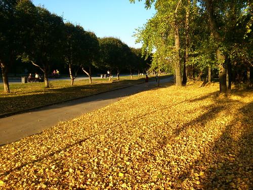 Осень в середине августа ©  ayampolsky