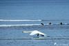 Faut que je rattrape le copain ! (jean-daniel david) Tags: cygne lac lacdeneuchâtel réservenaturelle eau bleu blanc oiseau oiseaudeau yverdonlesbains hiver