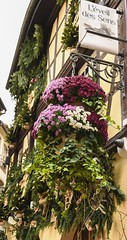 Planters (trainmann1) Tags: nikon d7200 nikkor 18200mm amateur handheld europe november 2017 fall vacation honeymoon strasbourg france strasbourgfrance french beautiful amazing scenic postcard decor decoration christmas colorful colors vibrant