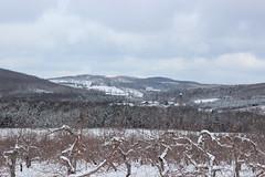 Winter Landscape in Dunham, Qc (pegase1972) Tags: winter landscape québec quebec canada hiver neige snow dunham qc easterntownships estrie licensed shutter dreamstime 123rf