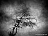 Ombres lointaine (JEAN PAUL TALIMI) Tags: arbre talimi jeanpaultalimi yonne solitude noiretblanc nature architecture bourgogne extérieur texture