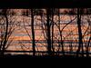 sun stripes (apalca) Tags: gelderland liendensewaard river maas rivier ice ijs winter zegge sedge icicles