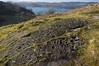 Ormaig (AJ Mitchell) Tags: rockartpanel argyll scotland britishisles petroglyph neolithic chalcolithic bronzeage prehistoric lochcraifnish jura pentax24mmpkprime eileanrìgh uk innerhebredes westernisles rockart cupsandrings coupelle moorland