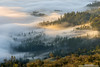 Rekindling (michael ryan photography) Tags: fog mist sonomacounty sonoma california northerncalifornia light sunrise michaelryanphotography