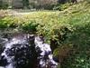 (sftrajan) Tags: moonviewinggarden japanesemaple pond japanesegarden sanfranciscobotanicgarden strybingarboretum goldengatepark sanfrancisco ботаническийсад botanicgarden botanischergarten jardínbotánico jardimbotânico jardinbotanique