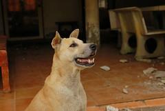 ,, Mamas Mama ,, (Jon in Thailand) Tags: k9 nikon d50 nikkor 175528 mamasmom mamasmama dogeyes dogsmile dogears dognose dogteeth themonkeytemple happydog dogexpression smilingdog dog gooddog littledoglaughedstories
