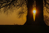 Trunks & Sun (A Costigan (Off for a while)) Tags: sunlight sundown sunset trees silhouettes trunks outdoor nature