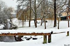 Photos Marco BP (13)_GF (marcbihanpoudec) Tags: bretagne neige plabennec plan deau lac banc arbres