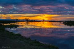 Sunrise At The Refuge (Mimi Ditchie) Tags: merced mercednationalwildliferefuge mercedrefuge sunrise morning clouds birds water pond droh dailyrayofhope getty gettyimages mimiditchie mimiditchiephotography