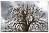 Ramificazione (Luciano Schano) Tags: sonyilce6000 ilce6000 sonyemount1855 trapani sicilia mediterraneo ramospoglio natura italia erice