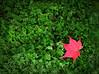 Just One leaf (jo92photos) Tags: maple japanesemaple acer moss mossgarden garden red temple templegarden japan autumn redandgreen green
