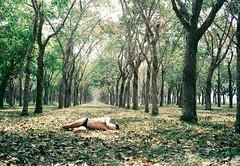 TreerF 3 (Wood Oliver) Tags: photoshop green film 135 olympus mjuii 35mm28 fujicolor asa100