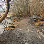 Muddy forest trail by a lake thumbnail