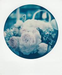 instant film (La fille renne) Tags: film analog lafillerenne instantfilm sx70 polaroid polaroidsx70alpha impossibleproject flowers roundframe sx70roundframe expiredfilm expired