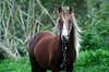 Cavalo (JotarAzor2013) Tags: animais cavalos