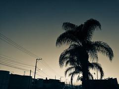 Cae la noche sobre una tarde calurosa dando paso a una fría y gélida noche.  #Instagram  #instamx  #instaqro  #sanjuandelrio  #sanjuandelrioqueretaro  #sjr  #queretaro  #qro  #mexico  #mx  #streetphotography  #streetphoto_qro  #fullcolors  #afternoon  #ph (a.moncadaolmos) Tags: picoftheday afternoon sjr ligths atardecer goodafternoon instaqro photography qro streetphotography instagram instapic mexico sanjuandelrio vscocam fullcolors queretaro streetphotoqro vsco sanjuandelrioqueretaro mx instamx