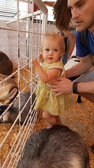 Houston Rodeo March 18, 2018 (Flan de Coco) Tags: houston rodeo 2018 pettingzoo kids daddy daughter march goats
