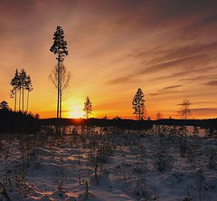 ~ sunset over Lower Skärsjön ~  Riddarhyttan, Sweden (Tankartartid) Tags: himmel sky moln clouds sunset solnedgång snö träd snow trees landsbygd landskap landscape vinter winter natur nature norden nordic västmanland riddarhyttan europe sverige sweden instagram ifttt