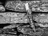 Stone Wall (alison's daily photo) Tags: wall stone tied lichen 7dwf monochrome blackandwhite detail 118picturesin2018 68118connected link connection 100xthe2018edition 100x2018 image22100