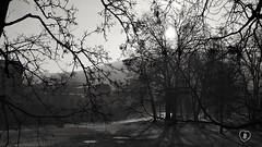 MORNING SCENE  #morning #scene #park #river #building #trees #sun #hill #landscape #Landschaft #blackandwhite #schwarzweiss #Photographie #photography (benicturesblackwhite) Tags: photographie trees sun building morning scene landschaft hill blackandwhite schwarzweiss river park landscape photography