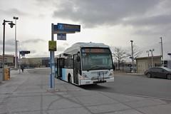 YRT 517 (Ex-VIVA 5156) (BillyCabic) Tags: bus transit yrt yorkregion vaughan