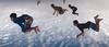 Sky Diving.. (nshrishikesh) Tags: marinabeach chennai nikon photography nikond750