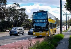B-Line - Northern Beaches Fleet No ST 2871 on Route B1 Mona Vale) Pittwater Road, Collaroy (john cowper) Tags: buses bus bline northernbeaches northernbeachesbline statetransit transportfornsw doubledecker suburb sydney newsouthwales collaroy