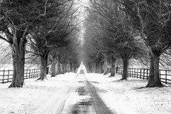 Waiting for Spring! (bharathputtur122) Tags: symmetry notley abbey bucks buckinghamshire waiting dry cold snow trees road monochrome