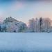 Syon Park Gardens - Spring In The Snow by Simon Hadleigh-Sparks