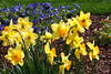 P3080037 (Vagamundos / Carlos Olmo) Tags: dallas usa eeuu vagamundos vagamundos2018 texas tejas flower flores jardín garden arboretum botanical botanicalgarden jardínbotánico