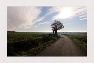 Tree below the moon (France - Pays de la Loire- Sarthe)