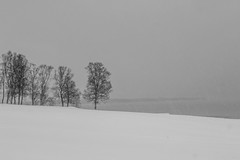 groupés (mimu_13) Tags: europe no nor norway troms tromsfylke tromso arbres blackandwhite hiver neige noiretblanc paysage saisons vinter winter samsungnx norvège tromsø nx500 håkøya