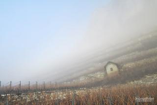 Le cabanon dans la brume - The shed in the mist 2