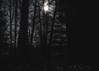 Night moves (mh1977!) Tags: night nightphotography nightlight olympus getolympus spooky scary woods trees tree