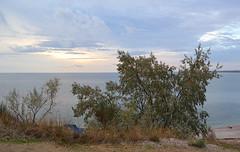 Elaeagnus orientalis (МирославСтаменов) Tags: crimea sevastopol seashore cloudscape horizon overlook shrub sunset elaeagnus