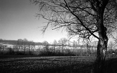 Last winter days (Rosenthal Photography) Tags: 20180202 landschaft bnw schwarzweiss ff400 zeven 35mm bäume washiz400 pflanzen ff135 schatten rodinal12521°c7min winter städte felder bw birke olympus35rd analog licht dörfer siedlungen day sun sunny washi washiz 125 landscape february nature mood olympus olympus35 35rd 40mm f17 rodinal epson v800 trees fields