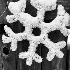 Black and white snowflake #snowflakes #snowflake #christmasdecorations #decoration #lawnornament #blackandwhitephoto #goth #Gothic #gothart #gothicart #photography #photo #photoediting #vintage #eerie #oldphoto (muchlove2016) Tags: snowflakes snowflake christmasdecorations decoration lawnornament blackandwhitephoto goth gothic gothart gothicart photography photo photoediting vintage eerie oldphoto