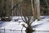 Bare Branches (dcnelson1898) Tags: yosemitenationalpark nps california sierranevadamountains sierranevada park nationalparkservice mountains snow winter trees outdoors mercedriver