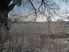 frozen (Vadim Beldiy) Tags: nature landscape frost freeze snow ice tree field sky nokialumia925 nokialumia carlzeisspureview carlzeiss cameraphone windowsphone nokia