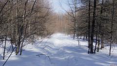 Hiver, sentier, Canada - 5180 (rivai56) Tags: villedequébec québec canada ca sentier en hiver parc park winter basedepleinairdestefoy walking trail