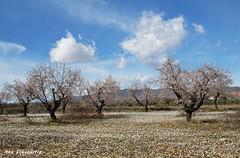Primavera adelantada (kirru11) Tags: campo flores almendros cielo nubes monte peñas rocas pueblo quel larioja españa kirru11 anaechebarria canonpowershot
