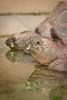 IMG_4247 (baiersven) Tags: baier chamäleon darmstadt fotokurs nasenbär schildkröte tier tierfotografie1 vivarium workshop zoo zoologischergarten rminknet