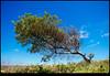 180121-5786-XM1.JPG (hopeless128) Tags: 2018 sky sydney tree australia maroubra newsouthwales au