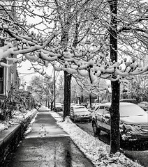 """Do not go gentle into that good night, / Old age should burn and rave at close of day; / Rage, rage against the dying of the light."" ―Dylan Thomas ❄️ 🌳 ❄️ (anokarina) Tags: blackwhite bw grayscale grey monochrome 🚘 🚙 🚗 🌳 ☂️ ☔️ 💦 ⛄️ ☃️ ❄️ appleiphone7 highlands louisville kentucky ky snow rain freezing storm winter spring globalwarming climatechange city urban street sidewalk trees perspective"